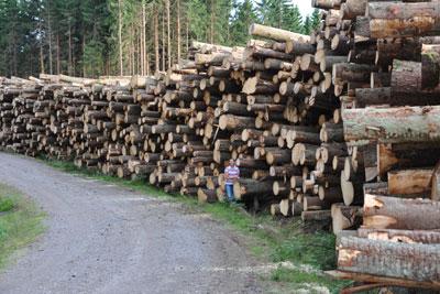 Skog slutavverkning i Vårgårda