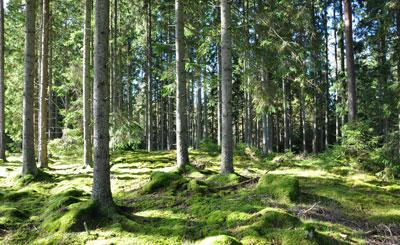 Skog Wårgårda Herrgård